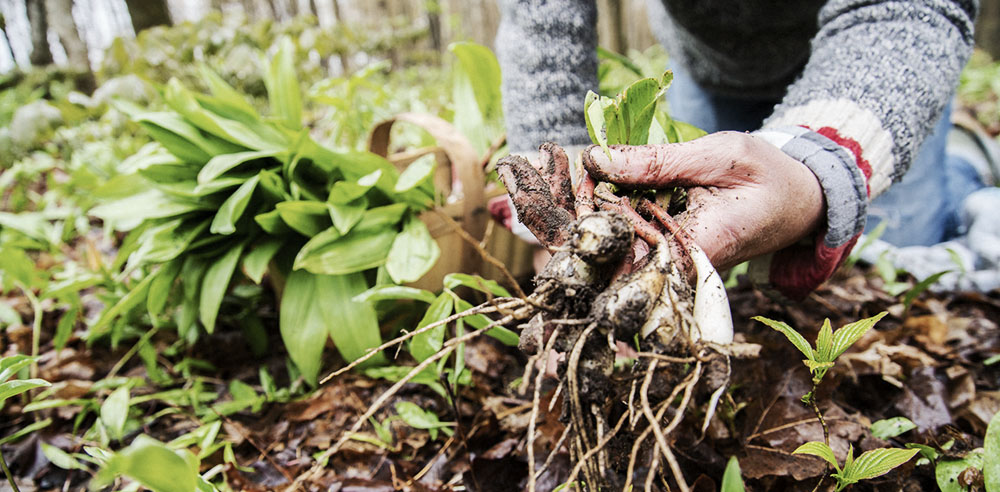 foraging tips for the fall